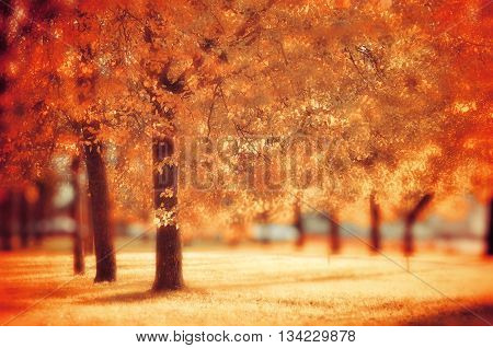 Landscape view of city autumn park with yellowed trees soft focus and creative filter processing - autumn landscape with colorful autumn trees in sunny weather