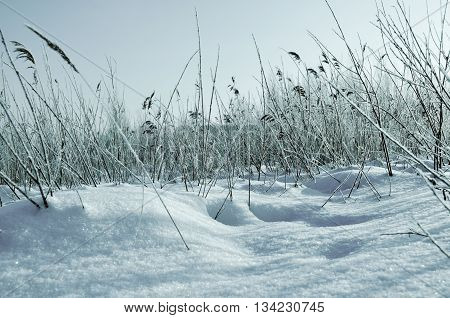Winter landscape - snowy winter field and frozen plants at the sunset natural sunset winter view with soft sunlight. Picturesque winter field landscape in cold tones