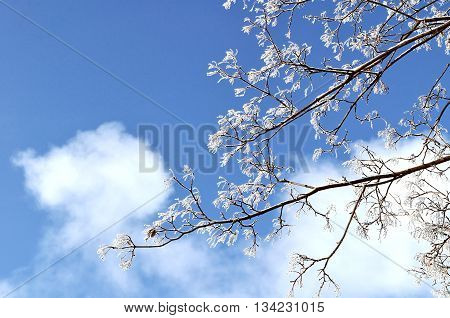 Winter landscape - frosty winter branches of the tree against the bright blue sunny sky. Winter natural landscape background with free space for text winter landscape natural view