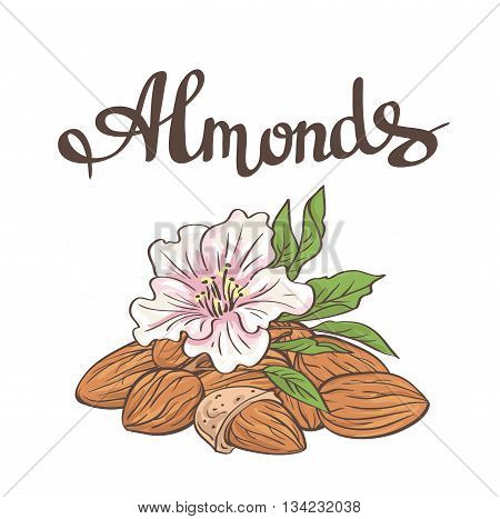 Almonds with kernels, leaves and flower. Vector illustration.