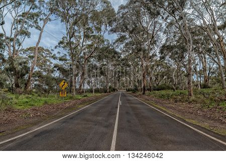 South Australia Road Inside In Eucalyptus Forest