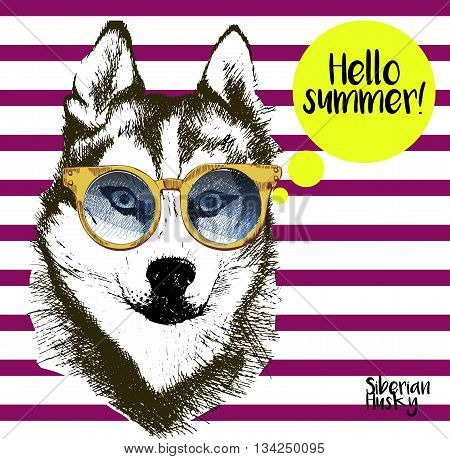 Vector close up portrait of siberian husky wearing the sunglassess. Bright hello summer husky portrait. Hand drawn domestic pet dog illustration. Isolated on background with lilac stripes.