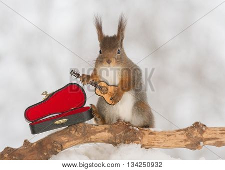 red squirrel in snow with guitar in winter