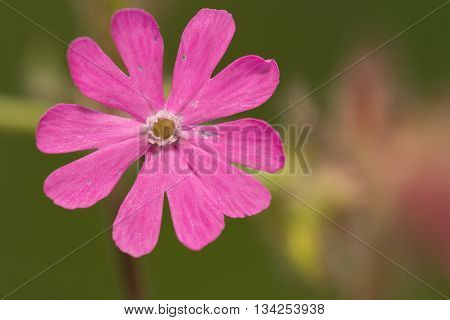 close up of a lila colored flower