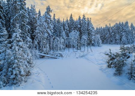 moose tracks on frozen river with snow in a forest forest landscape