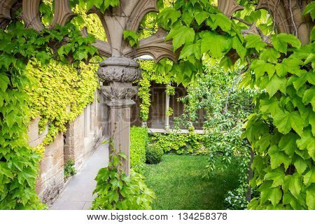 Grape leaves covering an inner court of a medieval castle