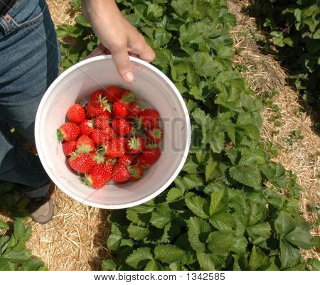 Bucket Of Strawberry