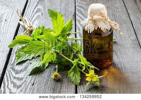 Medicinal plant Geum urbanum and pharmaceutical bottle. Used in herbal medicine cooking food for animals bee plant and insecticide. Selective focus