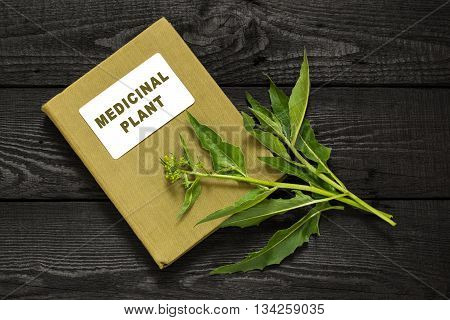 Medicinal plant Bunias orientalis (Turkish rocket hill mustard Turkish warty cabbage warty cabbage) and herbalist handbook. Used in herbal medicine cooking food for animals