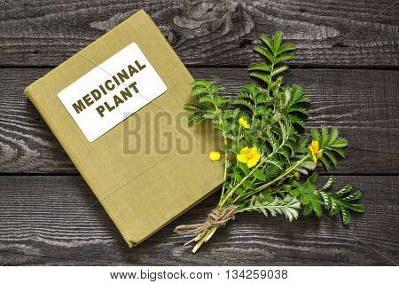 Medicinal plant Silverweed (Potentilla anserine or Argentina anserina) and herbalist handbook. Used in herbal medicine bee plant