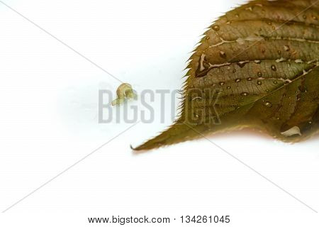 Worm On Leaf With Water Drops