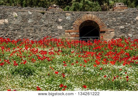 A fragment of the Arena of the Amphitheatre overgrown with flowers, Pompeii, Italy