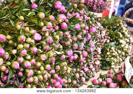 Heap of buttercup flowers or tulips at a flower market stall. Outdoor market with a stack of fresh pink flowers.