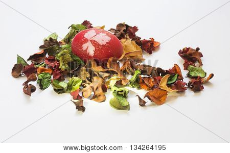 Easter egg amongst red petals dried plant on a white background