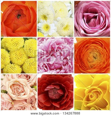 Flowers collage - red rose pink peony orange buttercup
