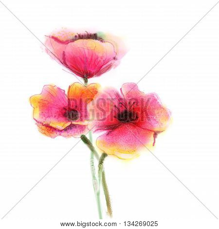 Watercolor painting poppy flower. Isolated flowers on white background. Pink and red poppy flower painting. Hand painted watercolor floral flower background.