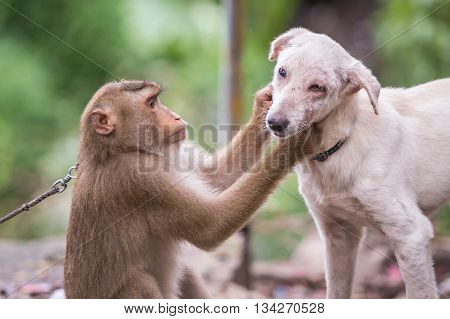Monkey Checking For Fleas And Ticks In The Dog