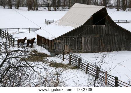 Old Snowy Barn