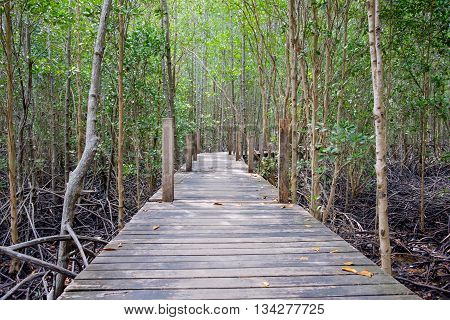 Wooden walkway bridge surrounded with mangrove tree in mangrove forest located at Rayong Thailand.