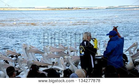 The Entrance - 12.06.2016, The Pelican Feeding takes place on The Entrance waterfront each day and is one of the Central Coast's most popular tourist attractions, entertaining and educating visitors and residents alike about the area's own pelican colony.