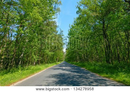 Road in a wood at summer time, Curonian Split