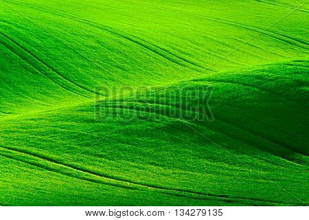 Green wavy hills in South Moravia, Csezh Republic