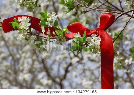 Springtime background with blossoming branch plum and red silk ribbon