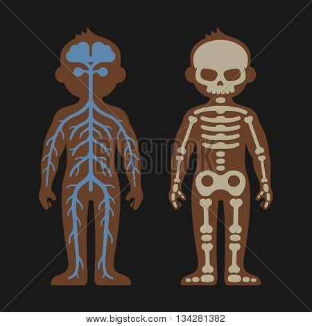 Human Body Anatomy Set. Skeletonand Nervous Systems. Vector illustration