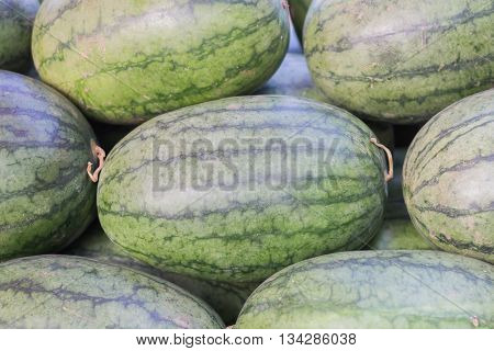young small watermelon in the garden in fine clear weather close-up