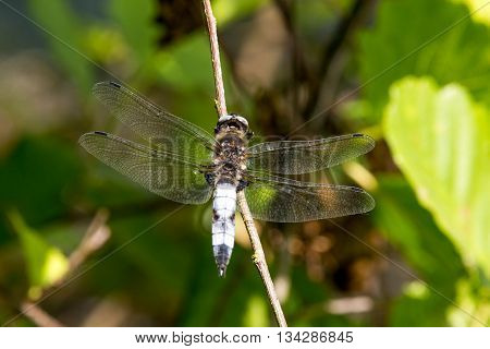 Dragonfly In Spring 2016