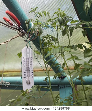 An analogue thermometer in a greenhouse next to the growing plants and red scissors vertical cropped shot
