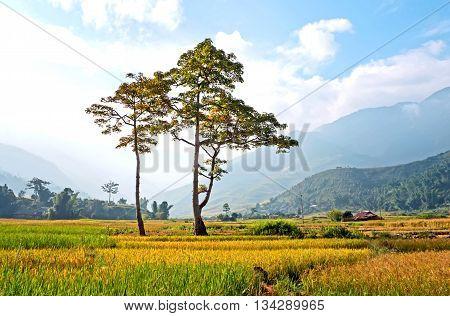 YEN BAI, VIETNAM, September 12, 2015 nine rice fields, high mountains, Yen Bai Province, Vietnam