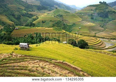 YEN BAI, Vietnam, September 12, 2015 terraced landscape, high mountains, Yen Bai province. Season cooked rice