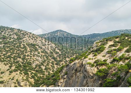 The mountain slopes which are growing evergreen trees and morning sun shines