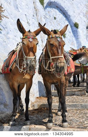 Two donkeys standing waiting for tourist on a street in Greece