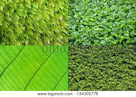Green Background Collection