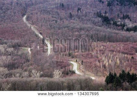 Winding Road In Bare Forest In Baden-wurttemberg, Germany