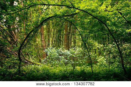 Deep forest with moss and other plants