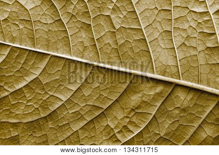 texture of a surface of a leaf of a plant with streaks closeup for a abstract natural natural background or for wallpaper of sepia color