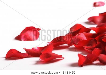 Petals of a rose, on a white background.