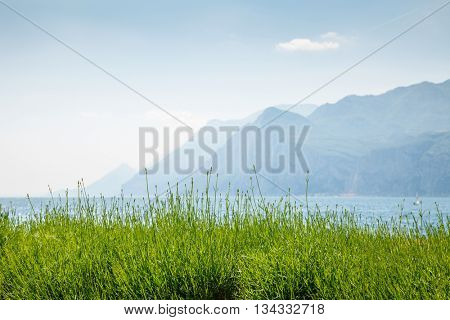 Green lavender bushes at pastel background with blue mountains silhouettes sky and water garda lake veneto region italy