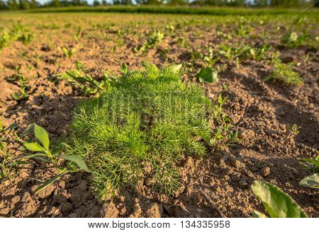 Cultivated land in a rural landscape in spring in Germany