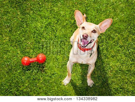 Dog Playing With Toy Or Bone