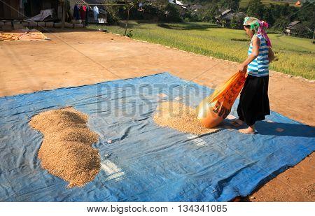 YEN BAI, VIETNAM, March 22, 2016 ethnic Hmong woman, highland Yen Bai, dried, called Rice