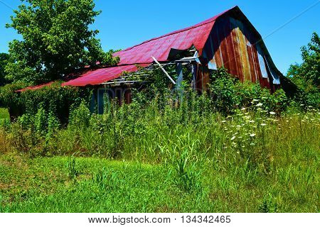 Abandoned collapsing barn taken in a lush green rural field