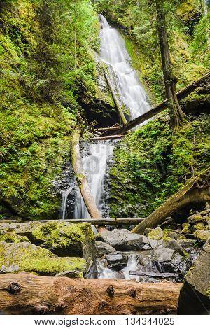 Murhut Falls in Olympic National Forrest Washington