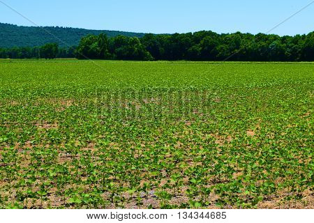 Agricultural farmland in a valley surrounded by the North American Deciduous Forest