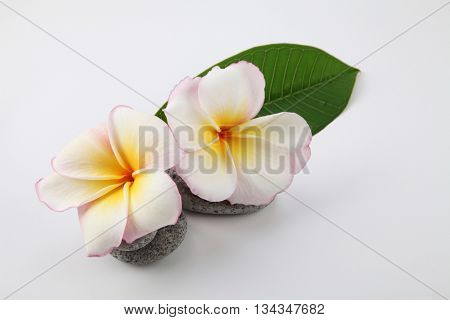 spa concept frangipani flower with stone and towel