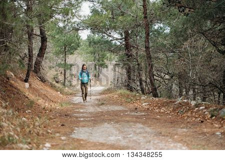 Hiker young woman with trekking poles walking on path among pine trees in summer forest