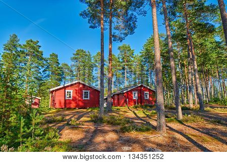 Typical Scandinavian Houses in Pine Forest Campsite